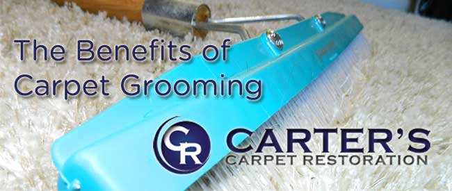 carpet grooming, carpet care, carpet cleaning,