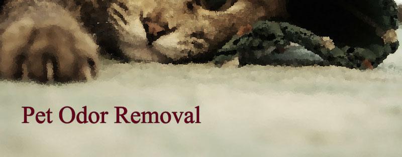 Pet Odor Removal in El Dorado Hills