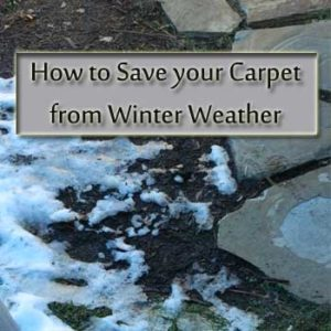 save your carpet from winter weather