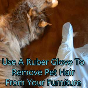 Easy Trick To Remove Pet Hair From Furniture Carter 39 S Carpet