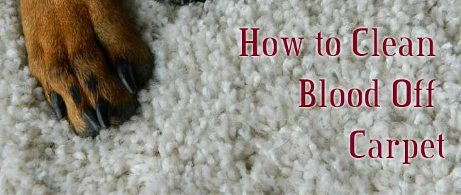 how to get blood off carpet