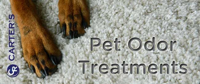 pet odor treatments for carpet