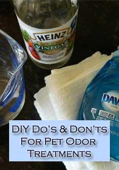pet odor treatments for carpet