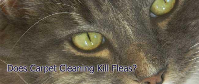 Carpet Cleaning Tips Carter S Carpet Blog