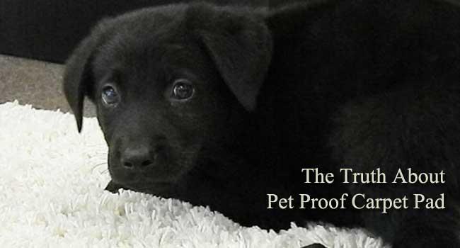 pet proof carpet pad