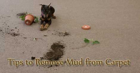 remove mud from carpet, carpet care tips, carpet cleaning