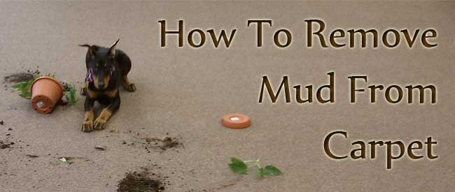 remove mud from carpet, carpet cleaning, mud removal