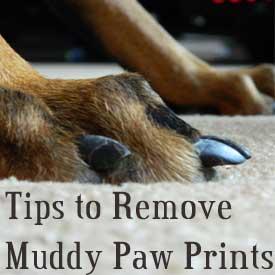 removing mud