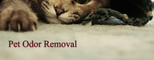 Pet Odor Removal El Dorado Hills