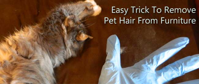 tip to remove pet hair