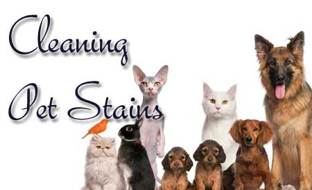 pet odor removal, carpet cleaning, cleaning pet stains