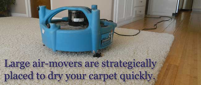 carpet cleaning services in el dorado hills