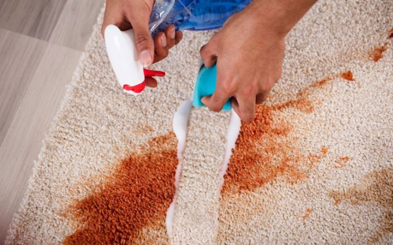 cleaning up spills to prevent allergies