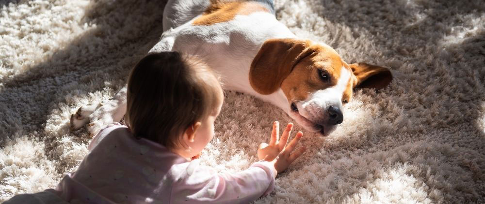 pet urine and stain removal Placerville
